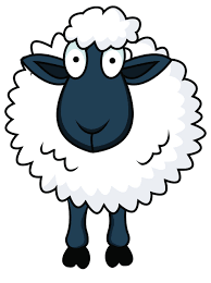 Cham's sheep
